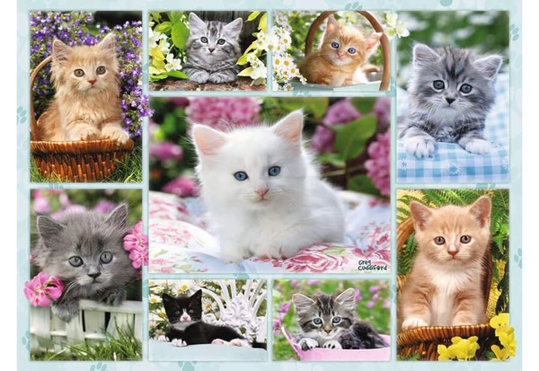 Image of   Kittens in a Basket