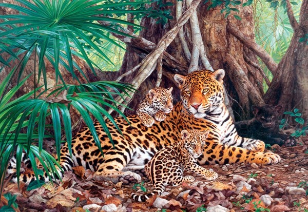 Jaguars in the Jungle