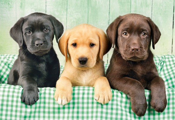 Image of   Three Labs