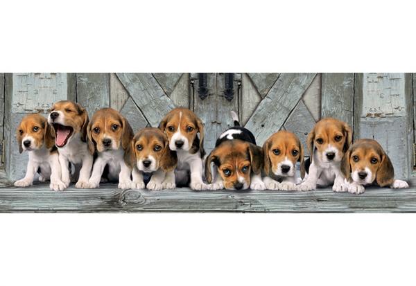 Image of   Beagles