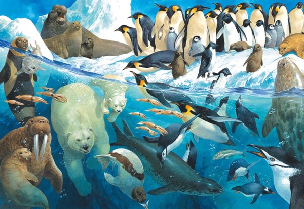 Image of   Animals of the Polar Region