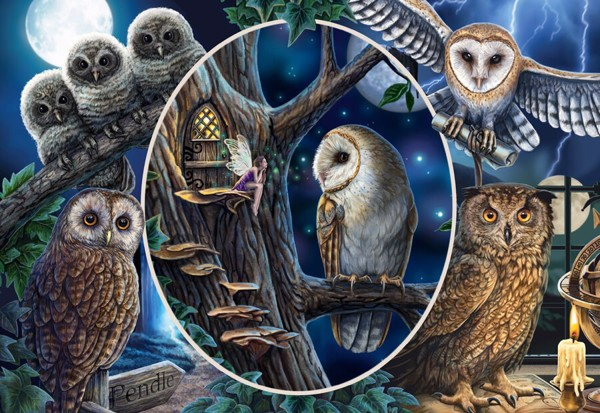 Image of   Mysterious Owls